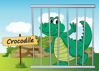 crocodile in cage