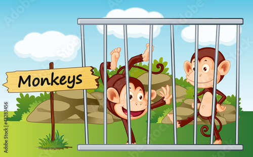 monkeys in cage
