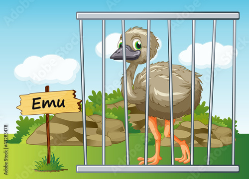 emu in cage