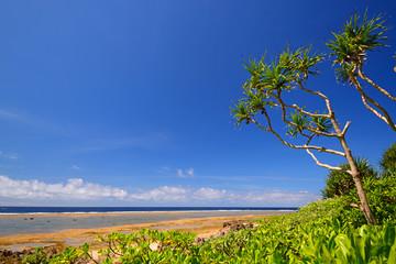 久高島のアダンの木の群生