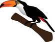 Beautiful toucan on branch