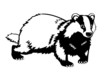 Eurasian badger black and white