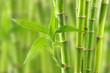 Fototapeten,bambus,grün,tropisch,hintergrund