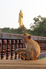Wild monkey with banana