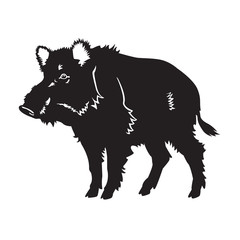 wild boar black white