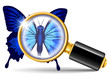 magnifier and butterfly
