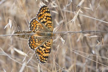 Mariposas apareandose entre la vegetación.
