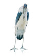 Portrait Of A Stork