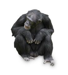 Portrait Of A Orangutan