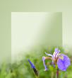 iris flowers on a green background for the text.