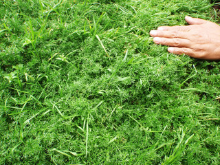 hand on grass fragrance