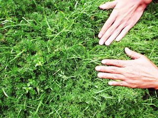 hands on grass fragrance