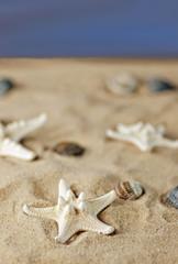 Am Strand mit vielen Muscheln und Seesternen