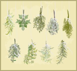 Spicy herbs. Collection of fresh herbs.