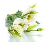 Fototapeta kwiaty - na białym tle - Kwiat