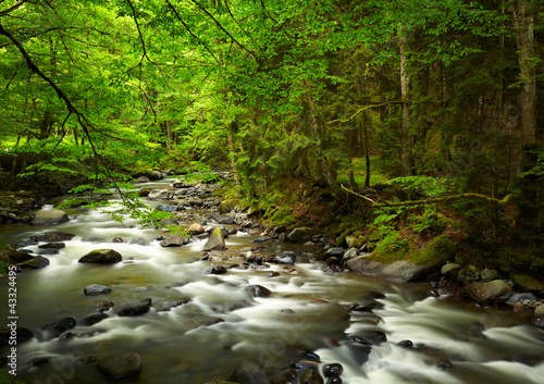 Mountain River in the wood