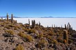 Incahuasi island in the salar de uyuni