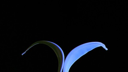 Blue paint in super slow motion splashing