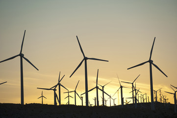 Wind farm in desert at sunset