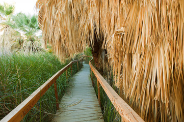 Wooden walkway through tropical area