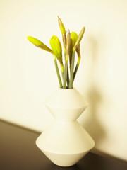 Flowers in modern vase