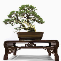 Bonsai tree on table