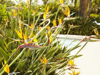 Exotic blooming flowers