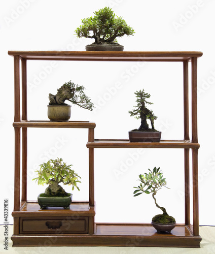 Bonsai trees on table