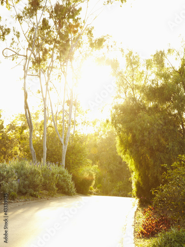 Road and lush foliage