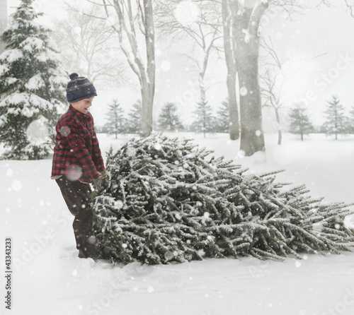 Caucasian boy dragging Christmas tree through the snow