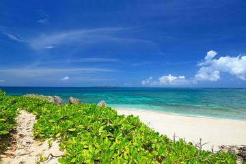 自然豊かな美しいビーチ