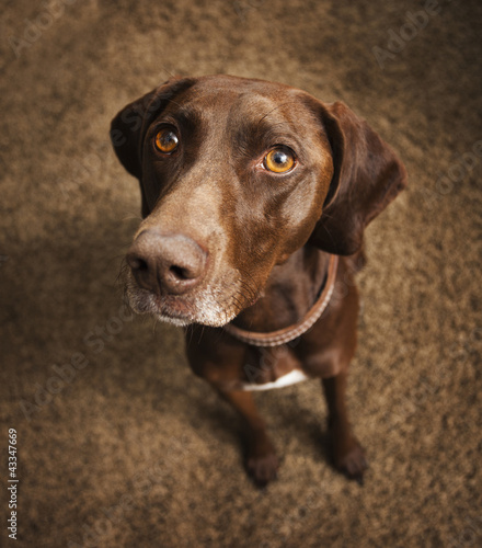Curious dog sitting on floor