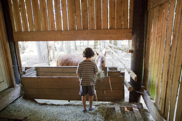 Caucasian boy feeding horse on farm