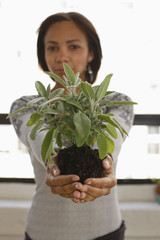 African American woman holding plant