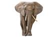 Fototapeten,afrikanisch,tier,groß,gefährlich