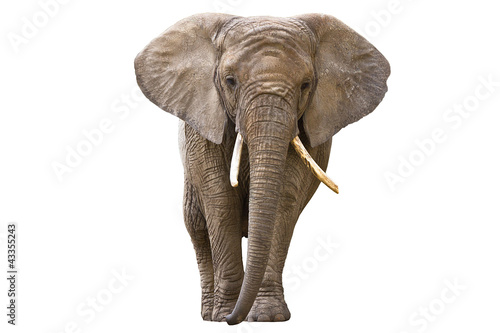 Tuinposter Olifant Elephant isolated on white
