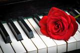 piano keyboard and rose