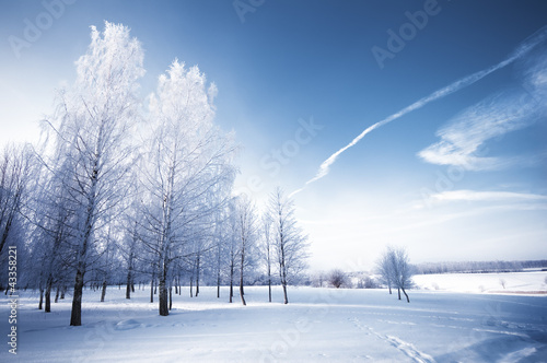 Winter day in park. Snowy landscape