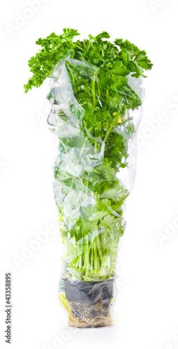 Fresh green parsley in a transparent package isolated on white b