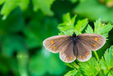 butterfly on a green leaflet in Nature  flora and fauna poster