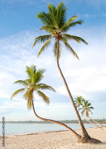 Fototapeten,baum,blau,palme,palme