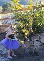 Caucasian girl watering tree in garden