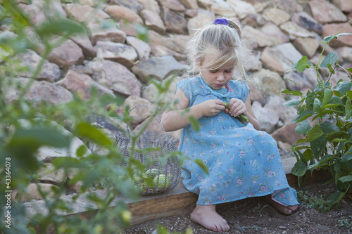 Serious Caucasian girl picking vegetables in garden