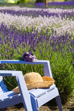 Blue chair in a purple field of lavender