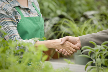 Nursery owner greeting salesman
