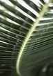 Close up green of plant leaf