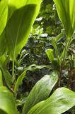 Lush vegetation in wet rainforest