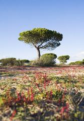 Tree growing in remote field