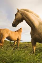Wild horses standing in field