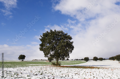 Tree growing in snow covered field